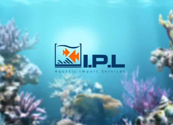 Web3D | מיתוג | עיצוב גרפי | IPL