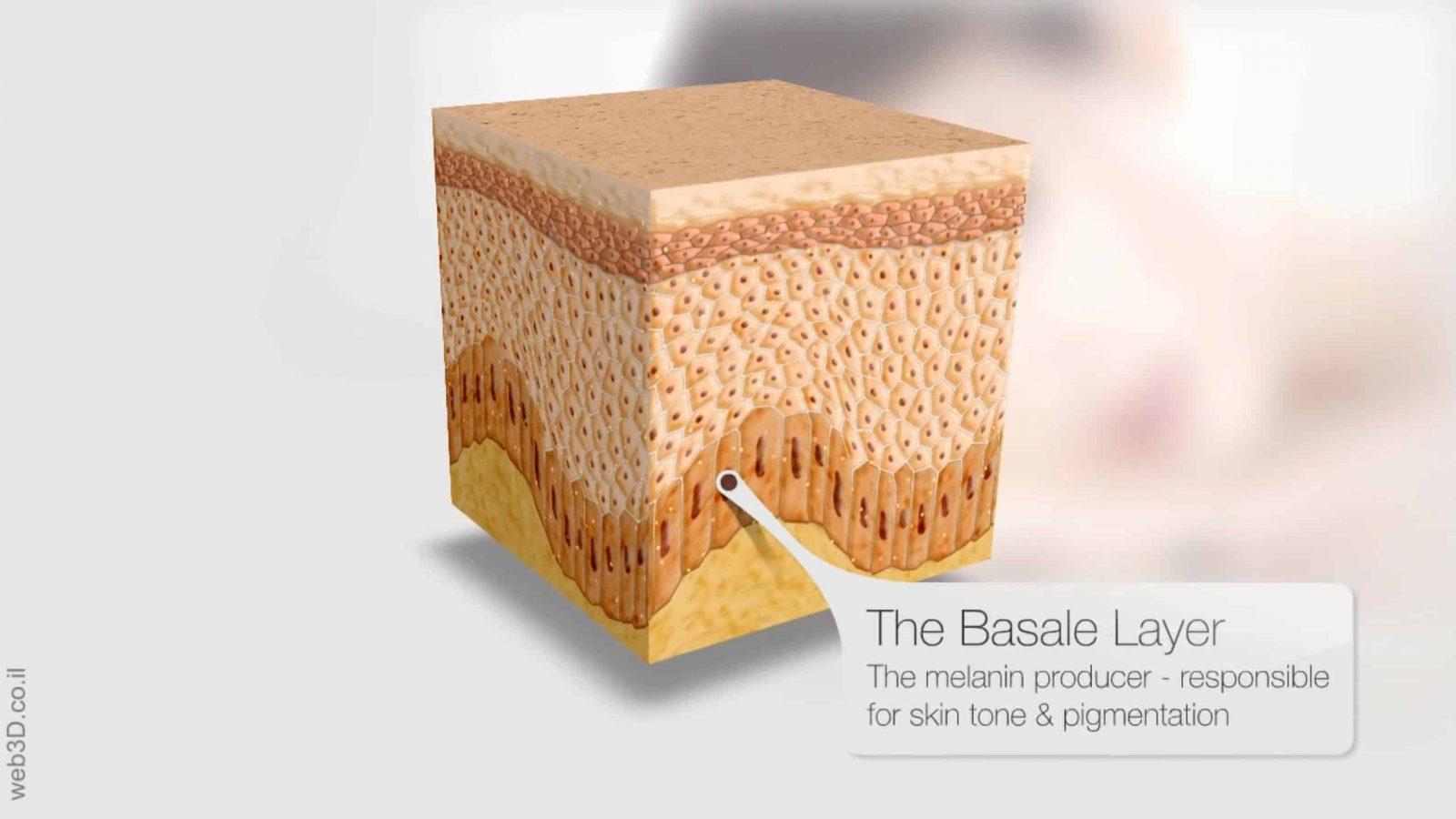 Web3D - סרטון תלת מימד - lovita - רקמת עור